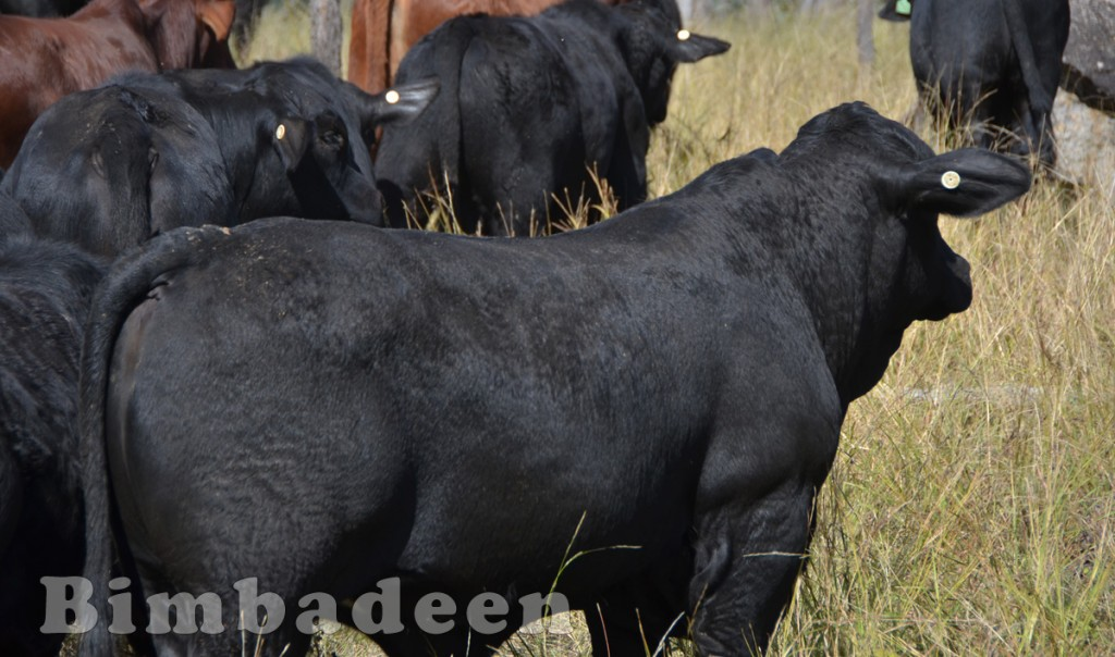 weaners_3473