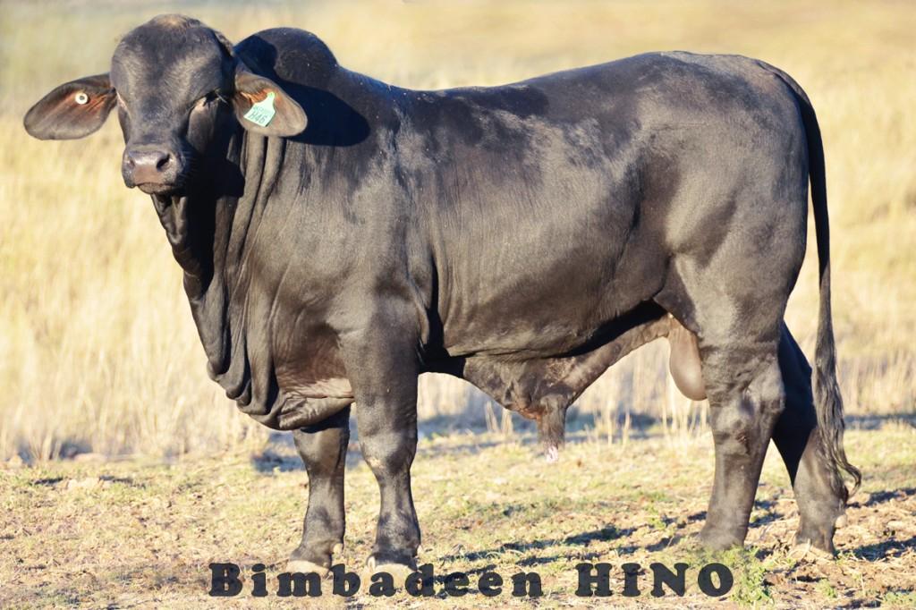 HINO_7720 e