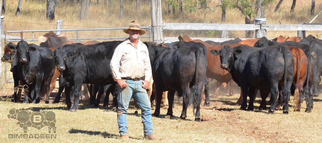 steers_9724 crop f
