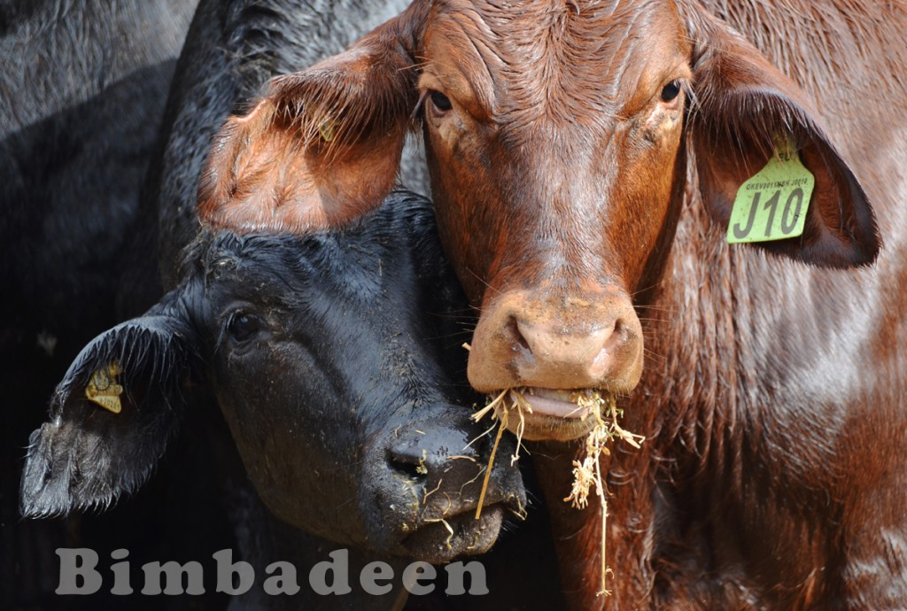 weaners_3280