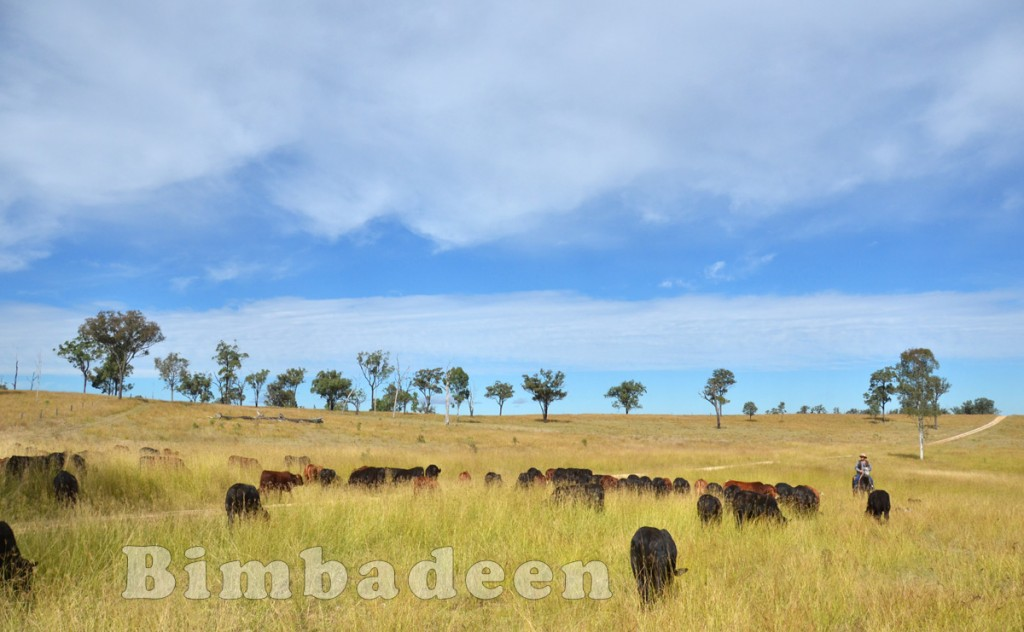 weaners_3430