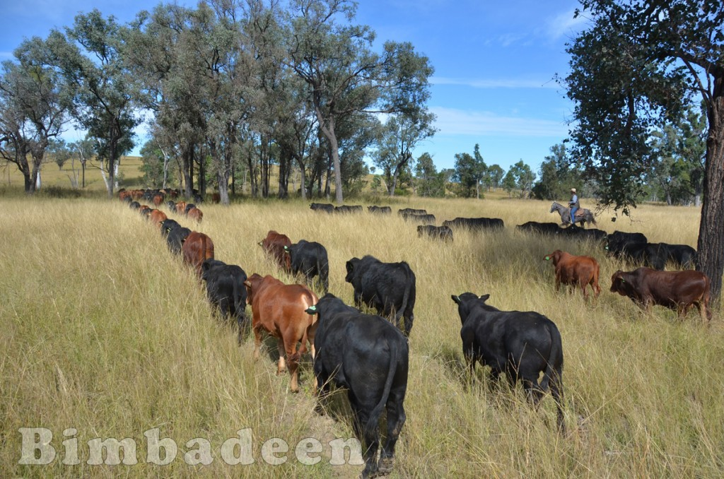 weaners_3488
