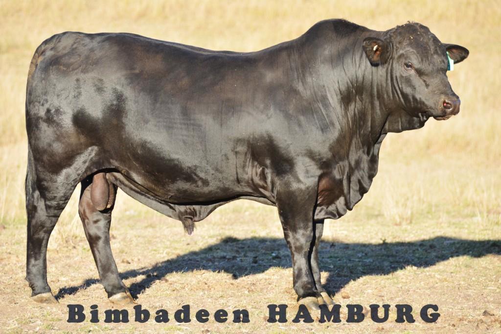 HAMBURG_7825 E