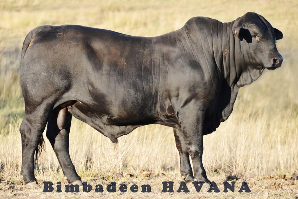 HAVANA_7852 bg E