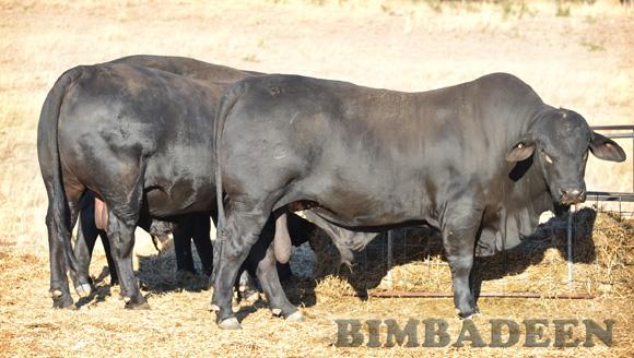 bulls_1140 E