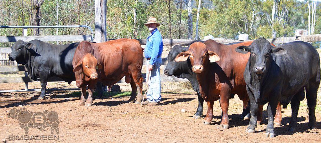 bulls_0793 f