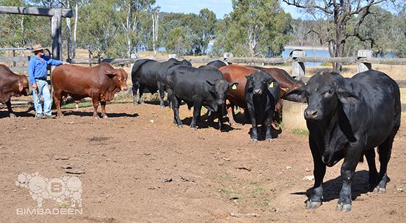 bulls_0880 e